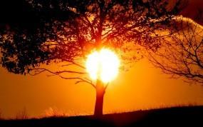 Обои Солнце за деревом: Солнце, Закат, Тень, Дерево, Деревья