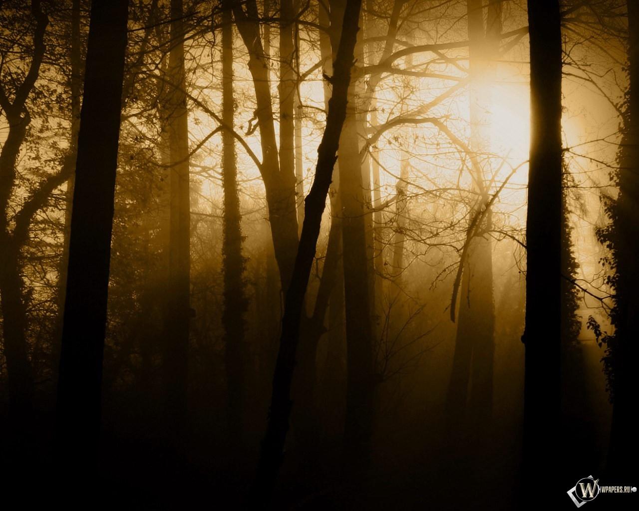 Густой лес 1280x1024