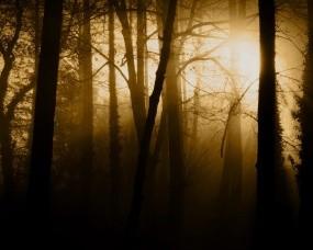 Обои Густой лес: Свет, Лес, Деревья, Туман, Деревья