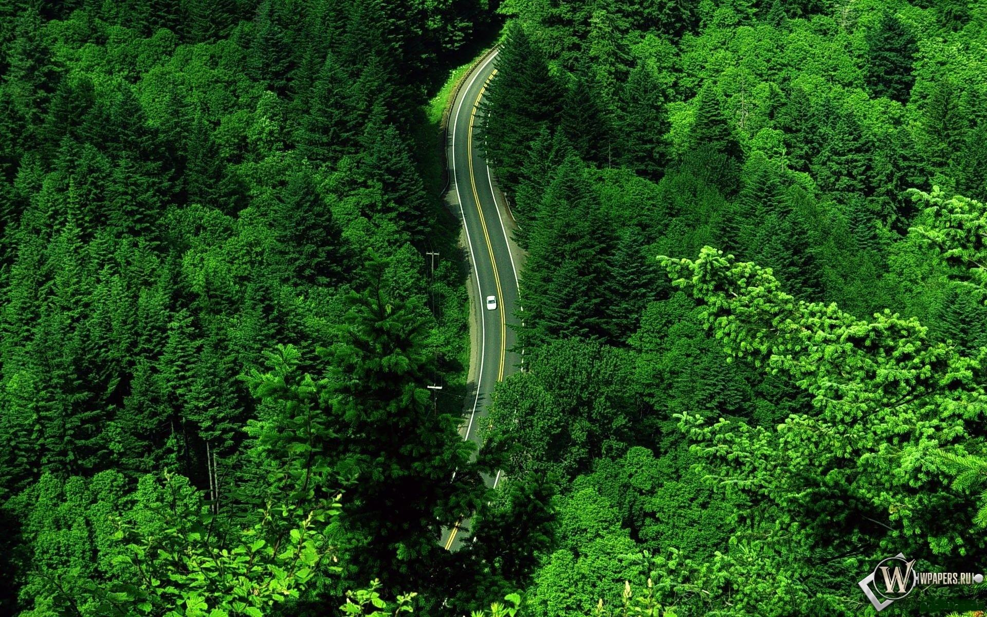 Дорога в лесу 1920x1200