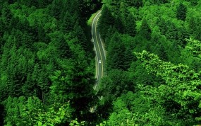Обои Дорога в лесу: Зелень, Дорога, Лес, Деревья, Деревья