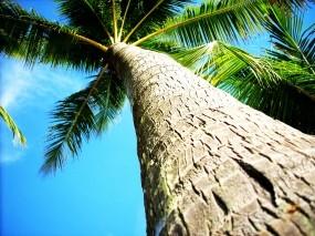 Обои Пальма: Пальма, Небо, Зелёный, Деревья