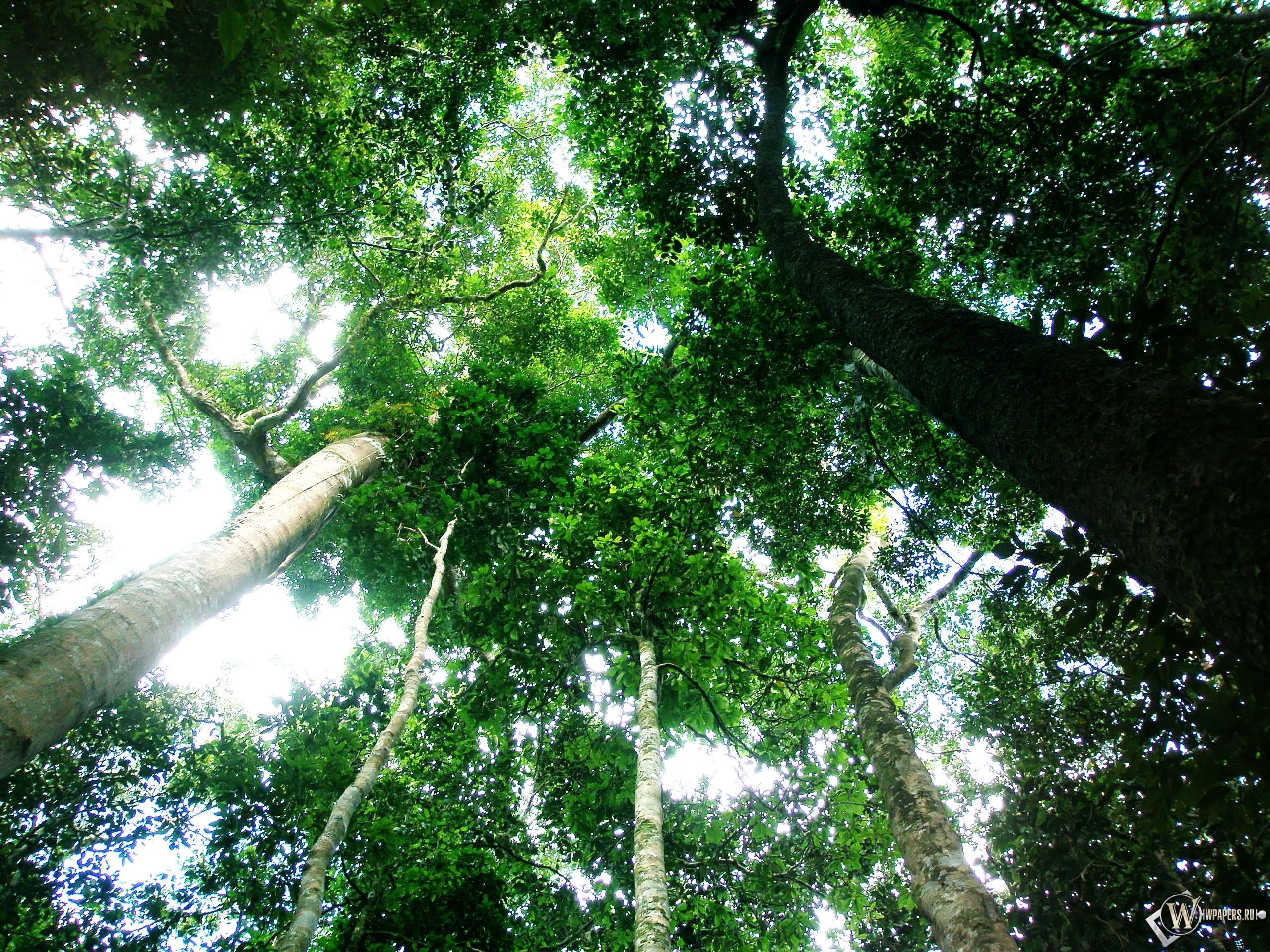 Тропический лес 2560x1920