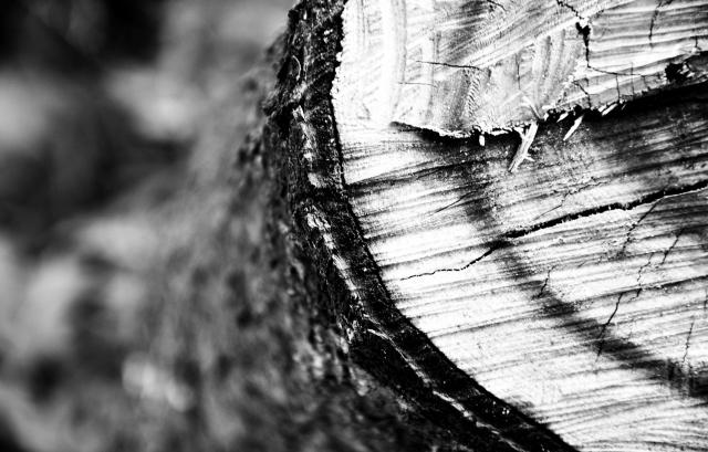 Разрез дерева