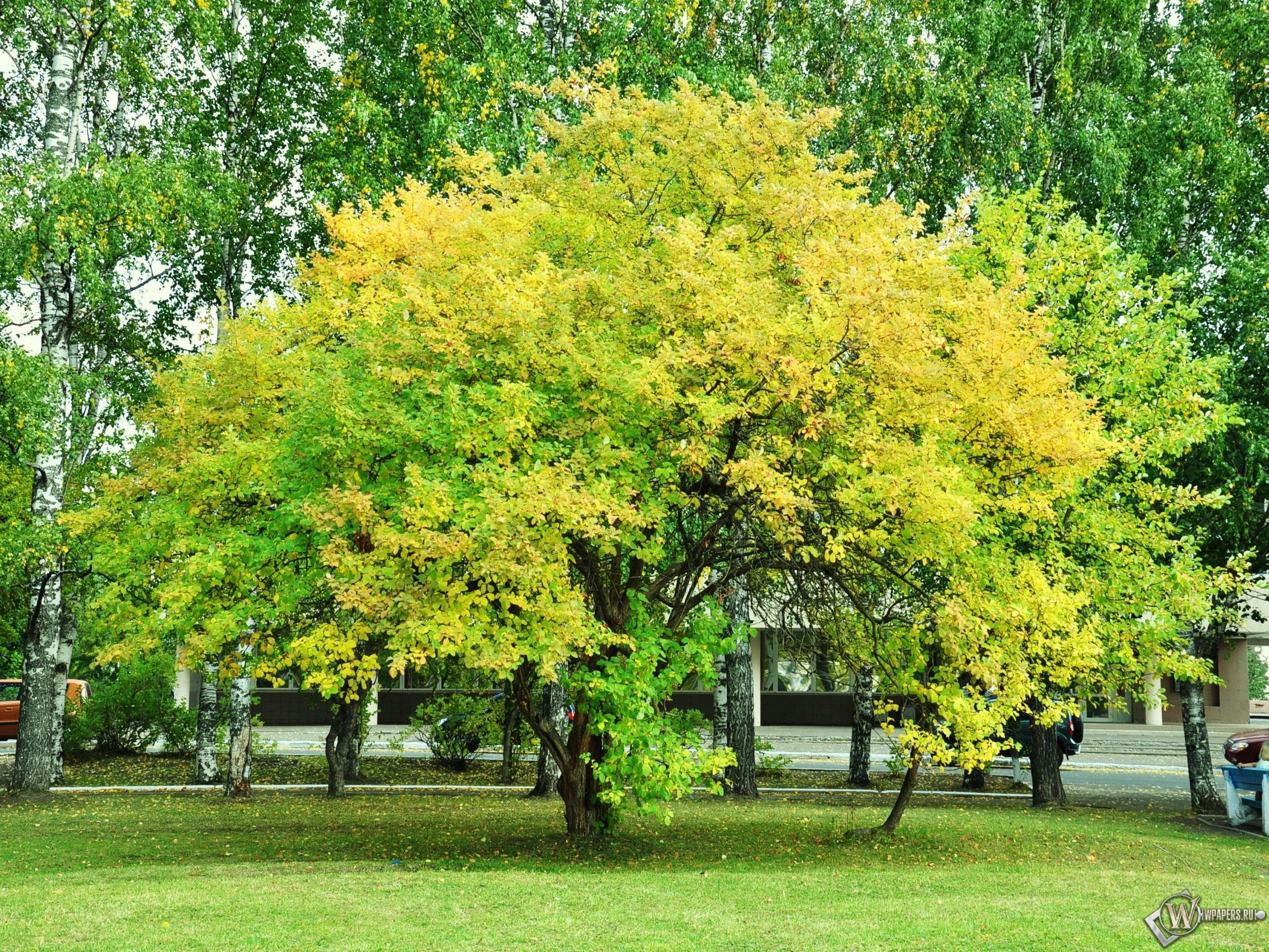красивое дерево 2560x1920