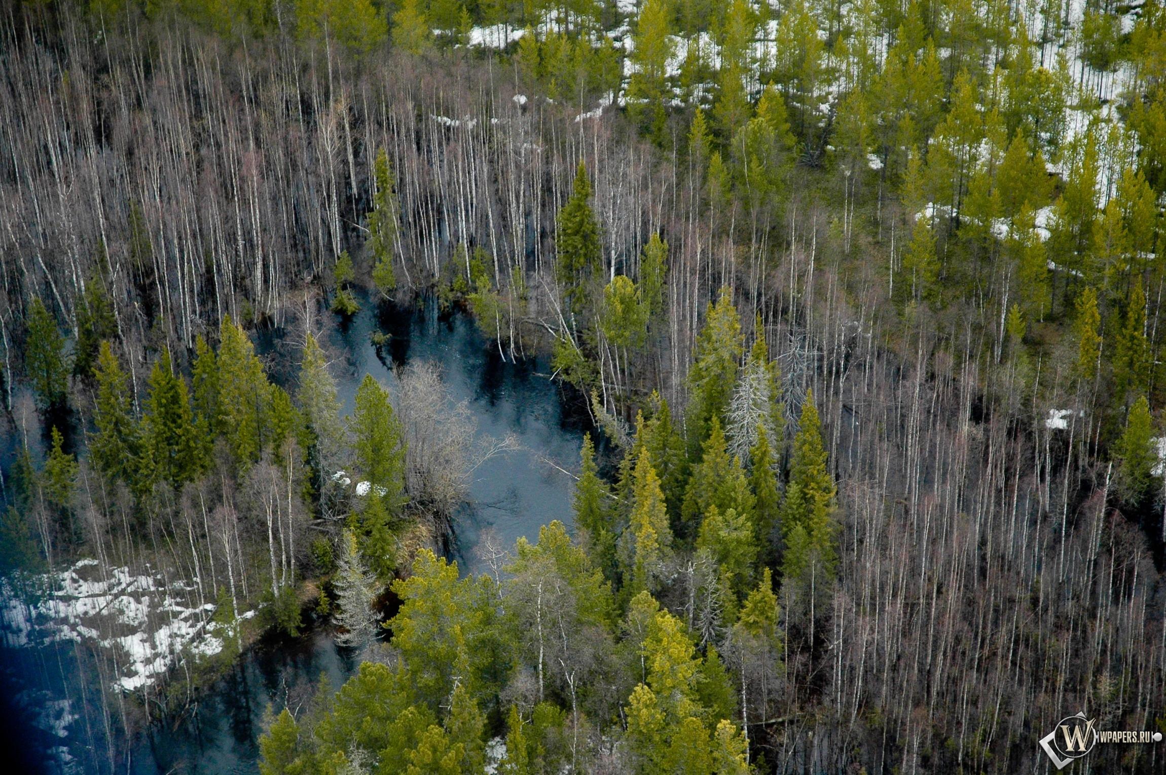 Весенний лес 2300x1530