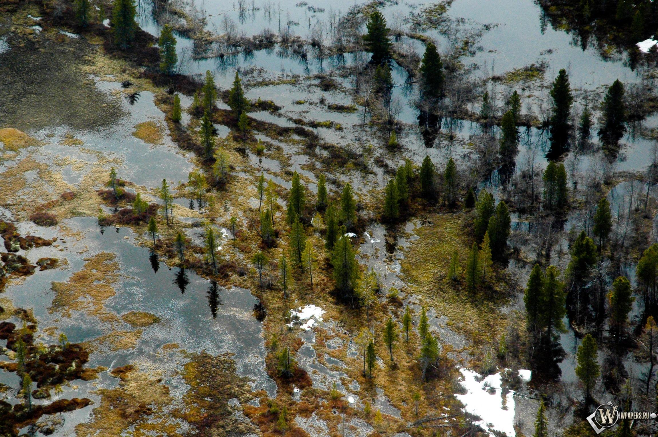 Затопленный лес 2300x1530