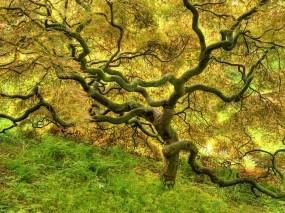 Обои Красивое дерево: Дерево, Ветви, Деревья