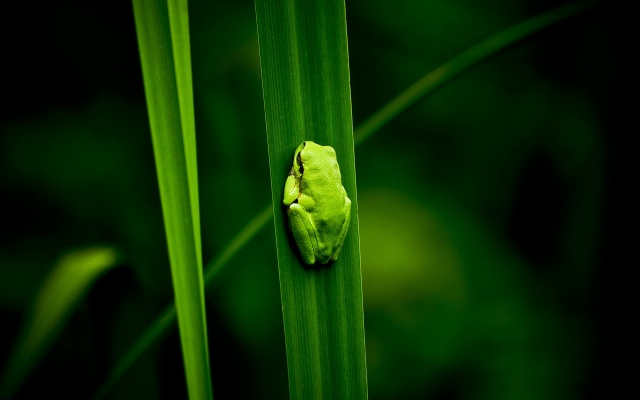 Лягушка на листе
