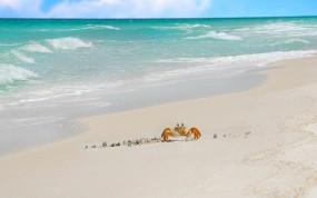 Обои Краб на берегу: Песок, Море, Краб, Животные