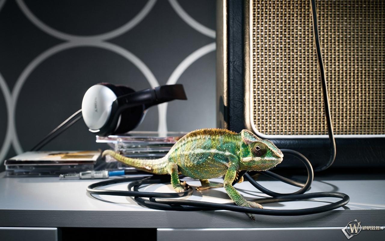 Хамелеон с наушниками 1280x800