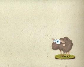 Обои Овечка: Овца, Животное, Животные