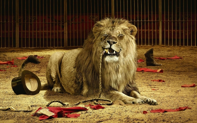 Голодный лев