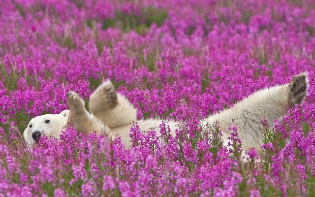 Полярный медведь в цветах