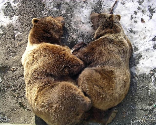 Bears Symbol of Bern