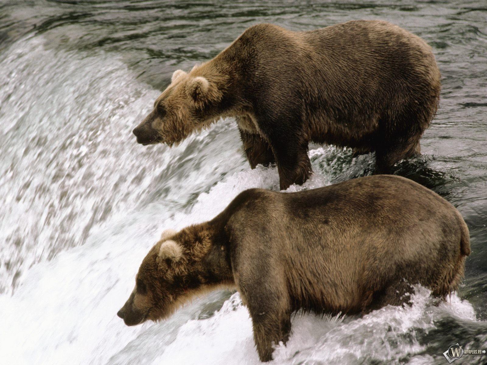 Медведи у водопада 1600x1200