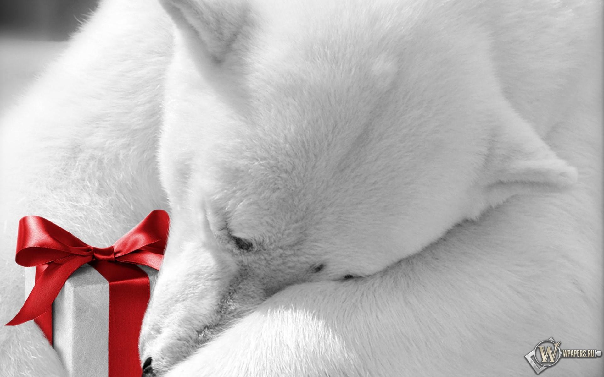 Медведь с подарком 1920x1200