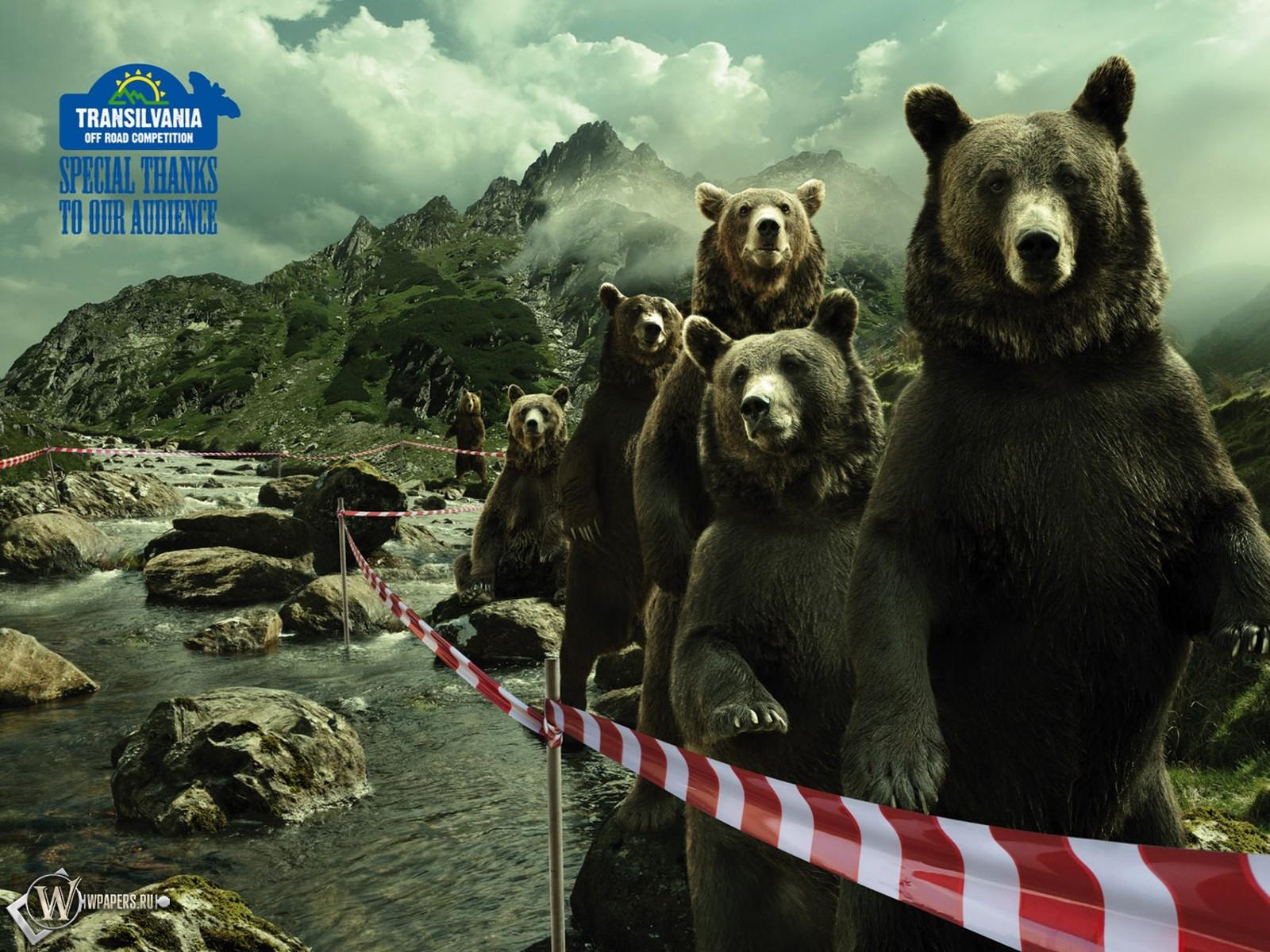 Очередь медведей 1600x1200