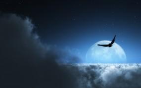 Обои Орел над облаками: Облака, Луна, Звёзды, Птица, Птицы