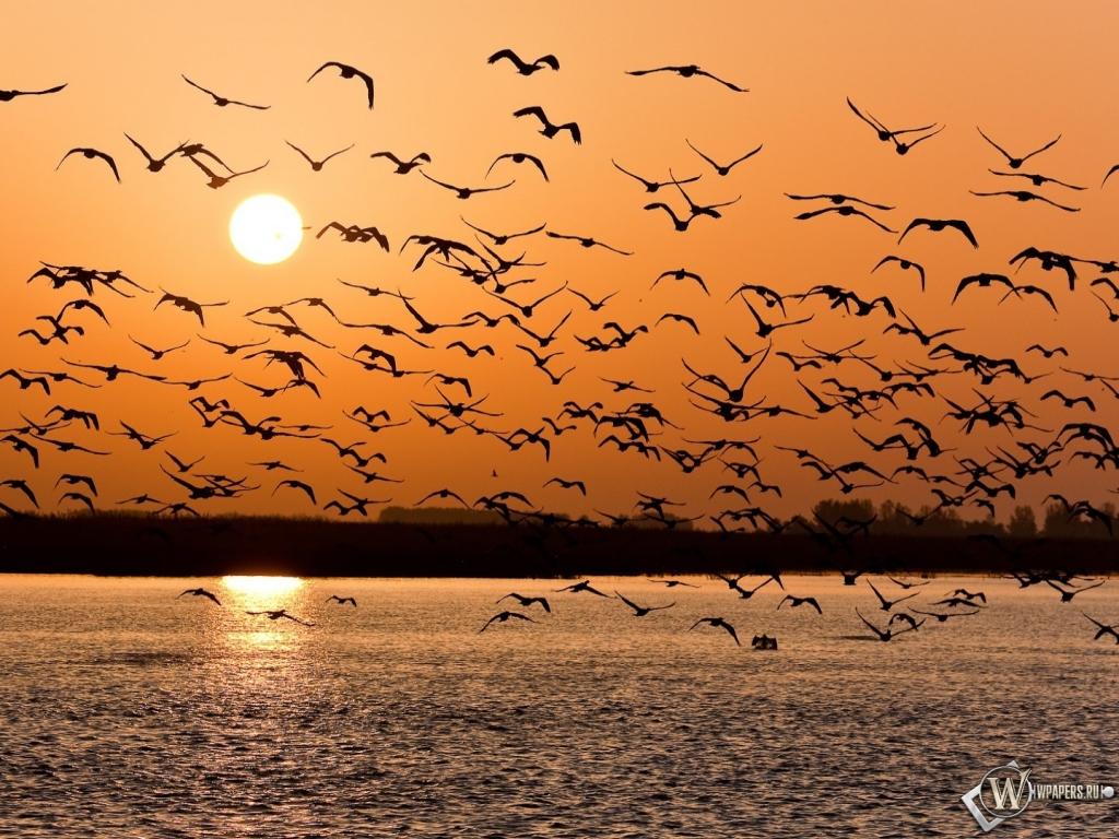 Стая птиц 1024x768