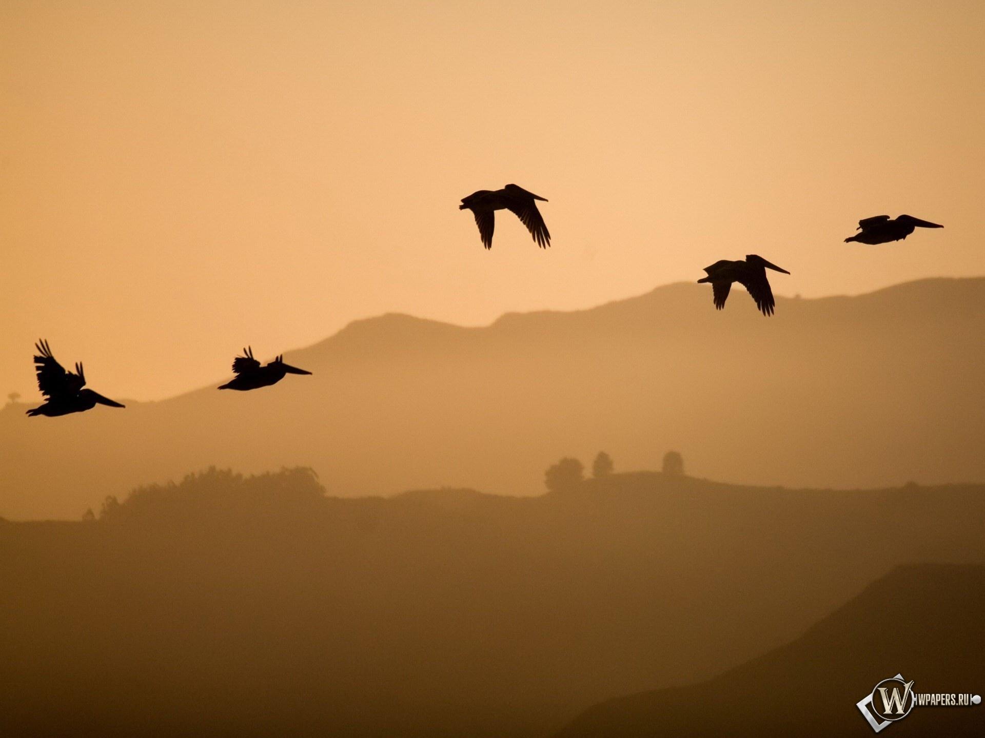 Птицы в полёте 1920x1440