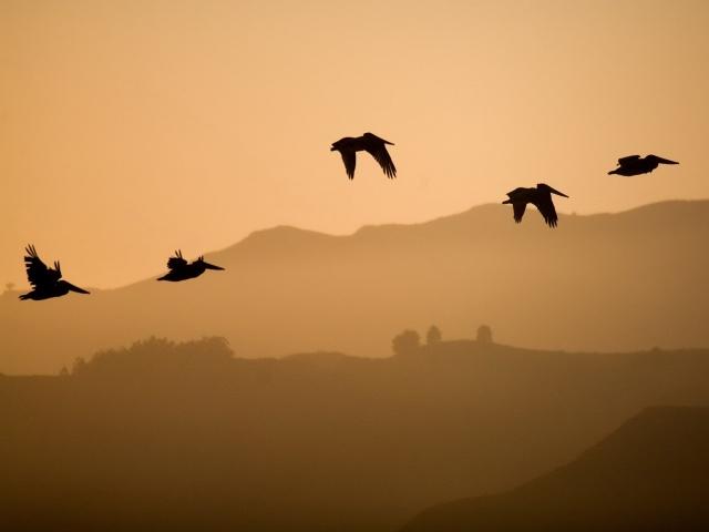 Птицы в полёте