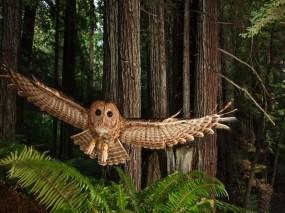 Обои Сова в полёте: Лес, Полёт, Птица, Сова, Птицы