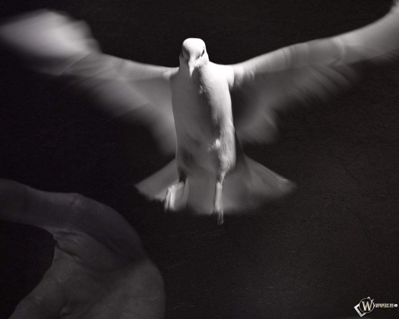 Белый голубь 1280x1024