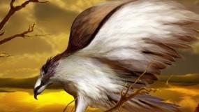 Обои Хищная птица: Рисунок, Хищник, Птица, Птицы