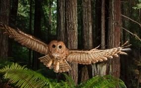 Обои Сова: Полёт, Крылья, Сова, Птицы