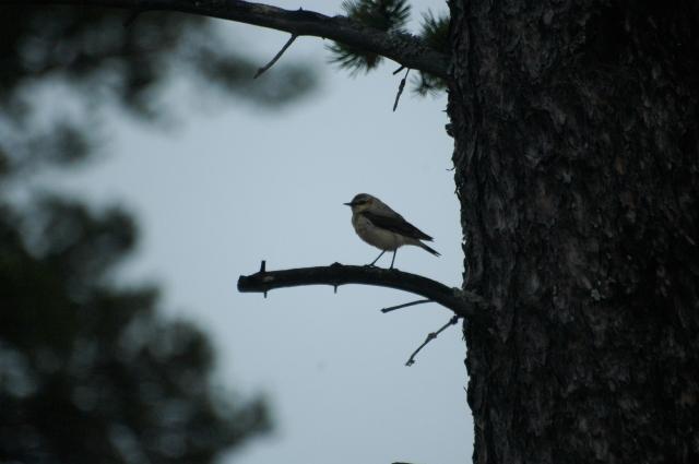 Птичка дереве