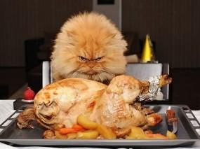 Обои Кот и индейка: Кот, Индейка, Кошки