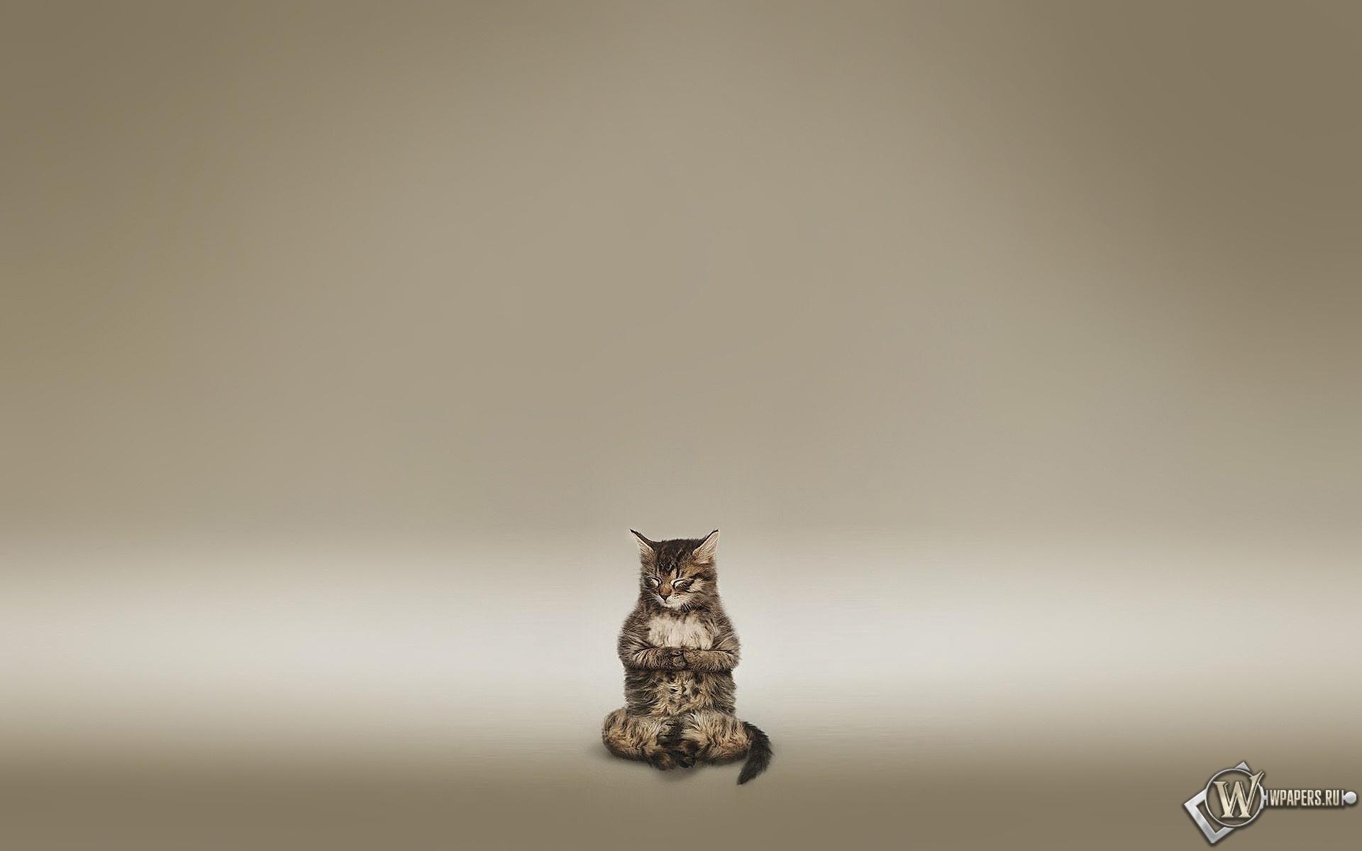 Кот медитирует 1920x1200