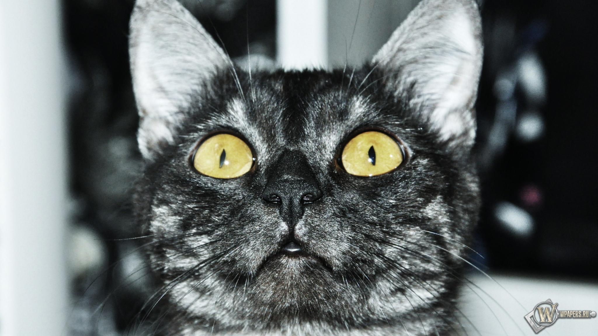 Кот смотрит вверх 2048x1152