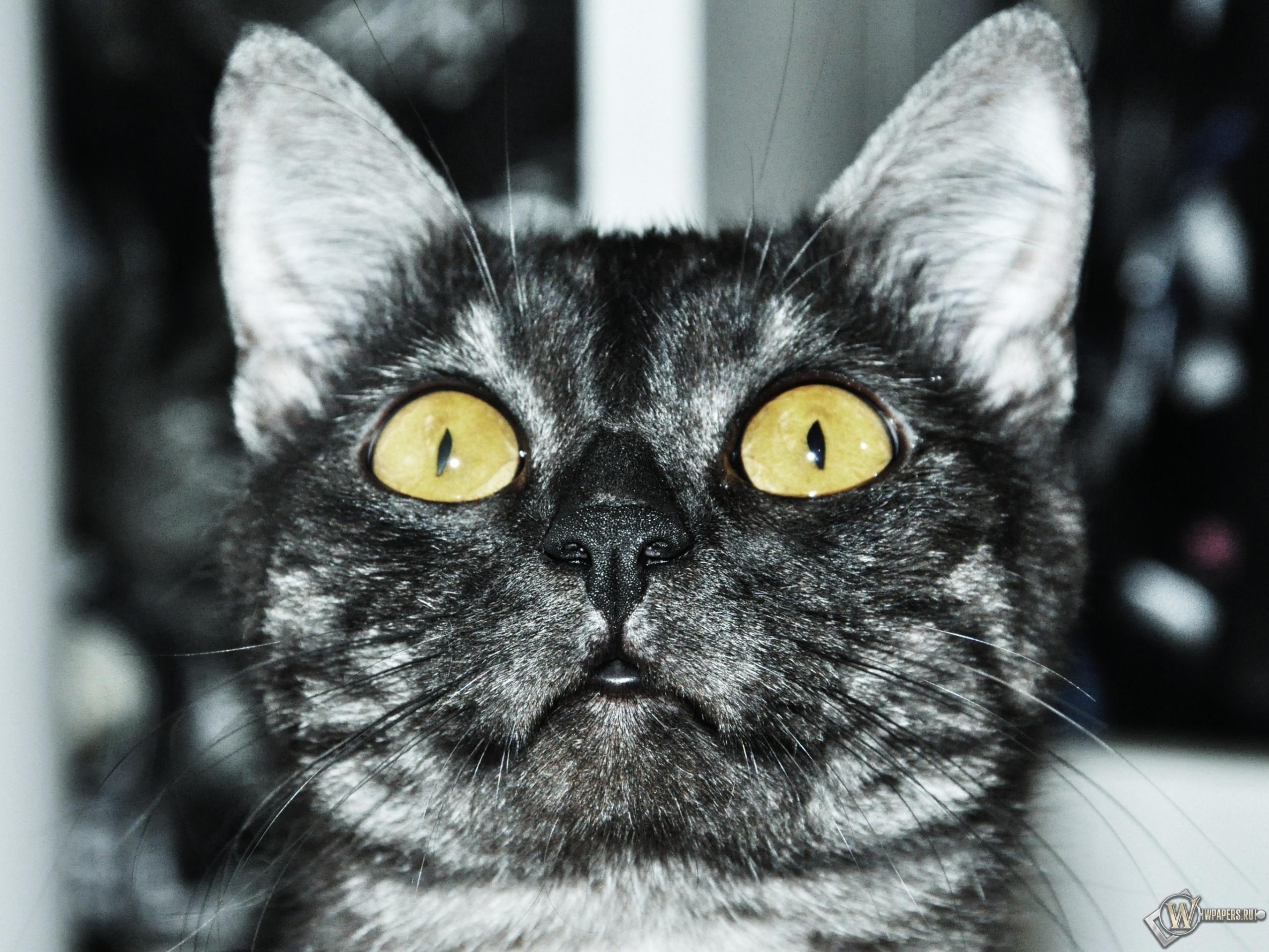 Кот смотрит вверх 2560x1920
