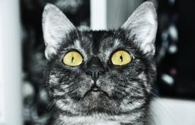 Обои Кот смотрит вверх: Взгляд, Кот, Кошки