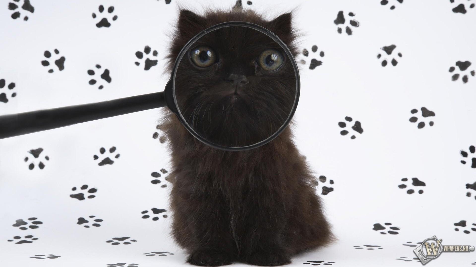 Котенок с лупой 1920x1080