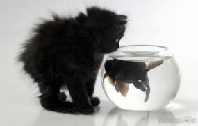 Обои Котенок и аквариум с рыбкой: Аквариум, Рыбка, Котёнок, Кошки