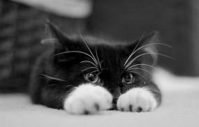 Обои Уставшая киска: Усталость, Котэ, Кошки