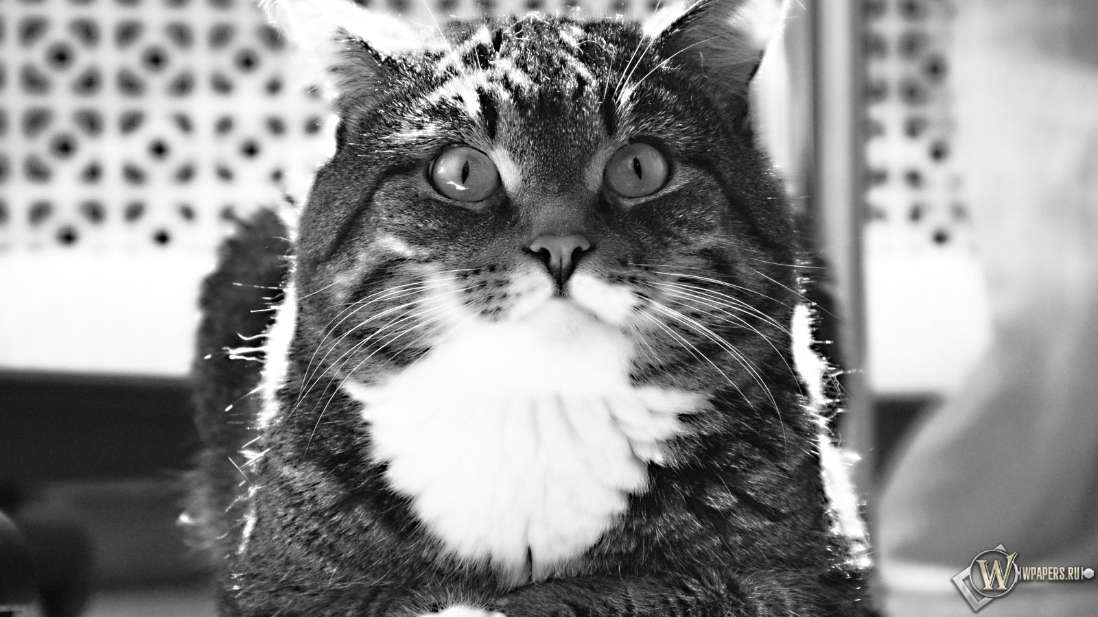 Полосатый котик 1600x900