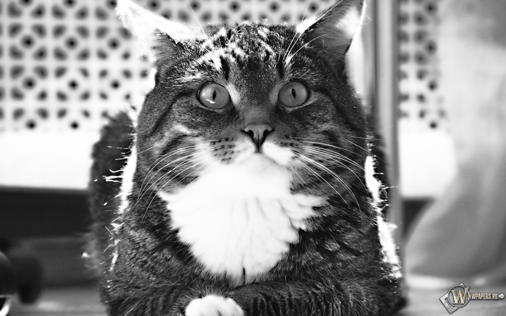 Полосатый котик 1920x1200