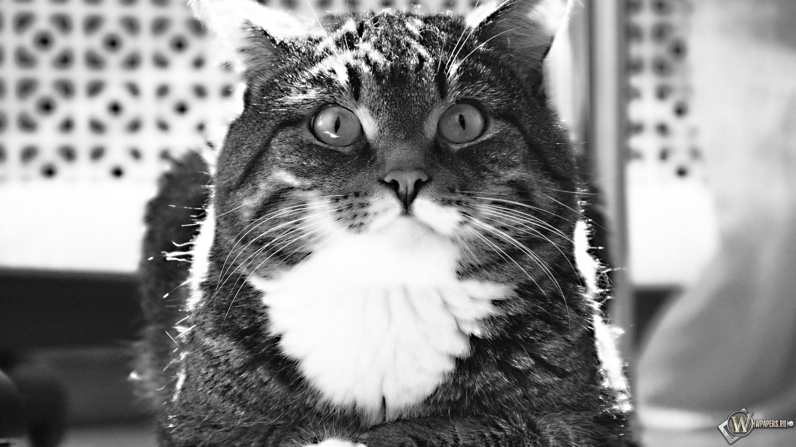 Полосатый котик 2560x1440