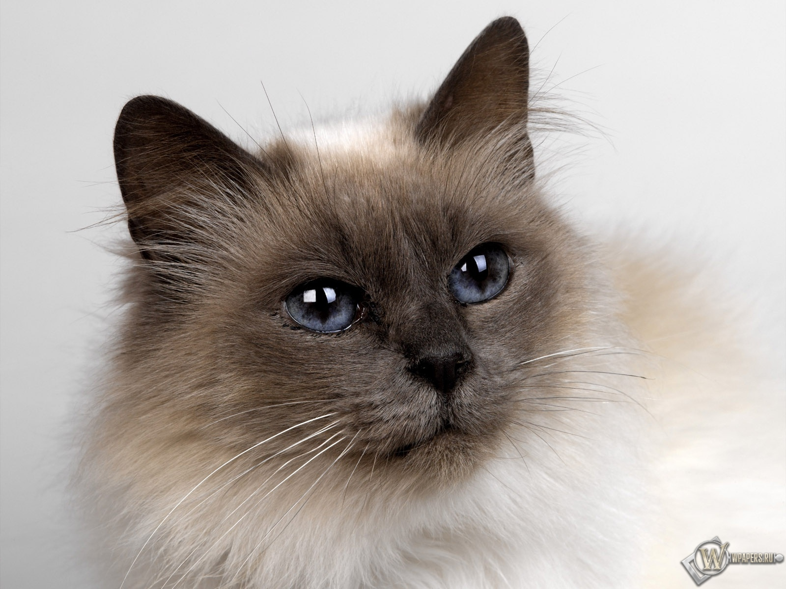 Кошачий взгляд 1600x1200
