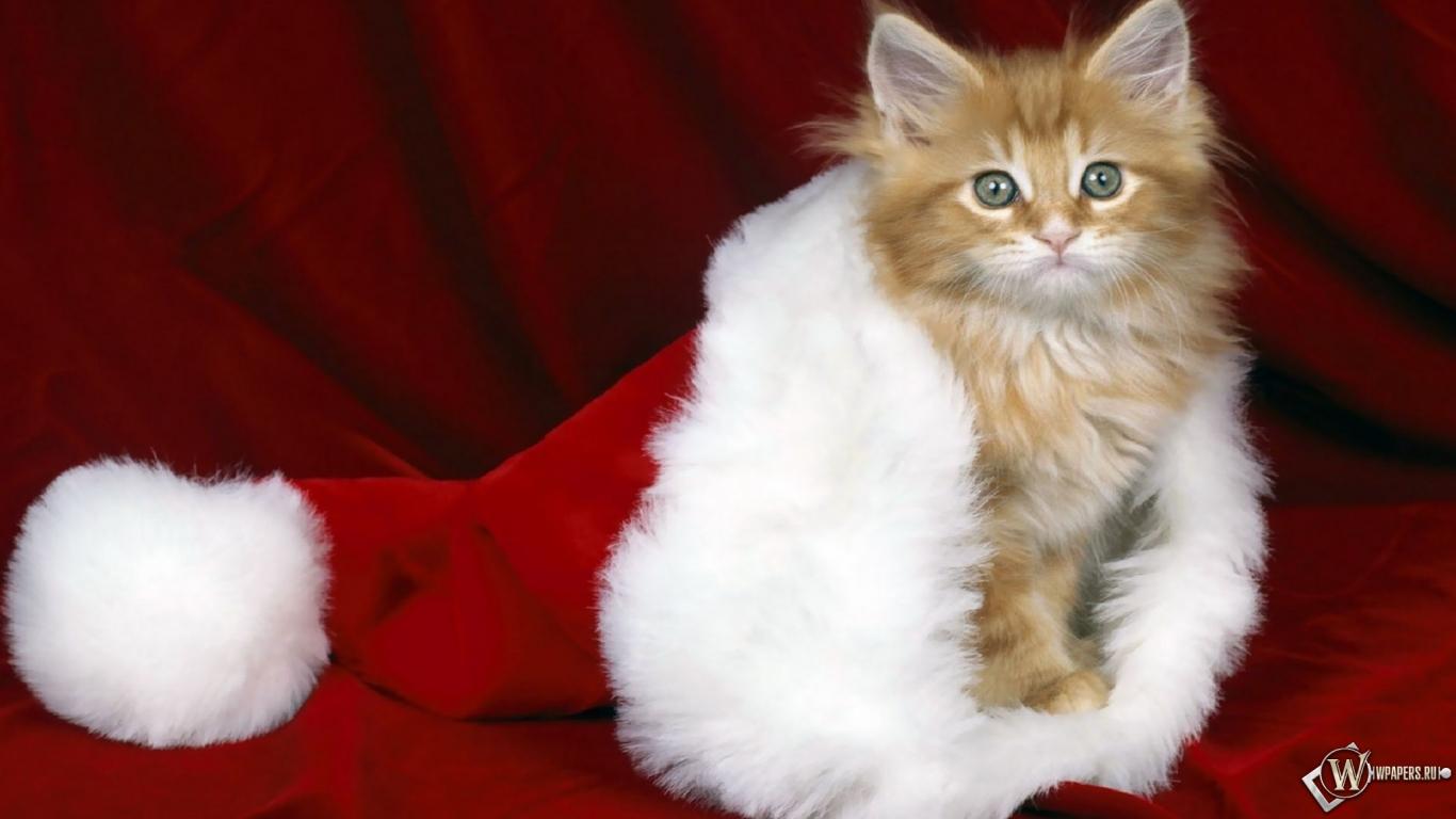 Кошки тоже любят Новый год 1366x768