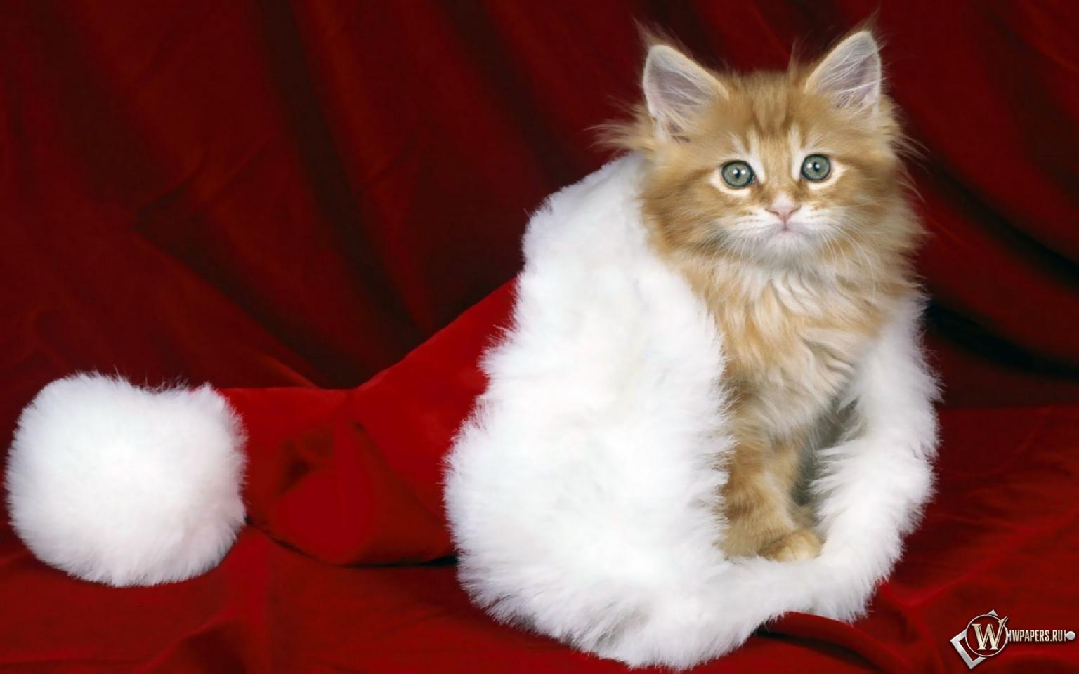 Кошки тоже любят Новый год 1536x960