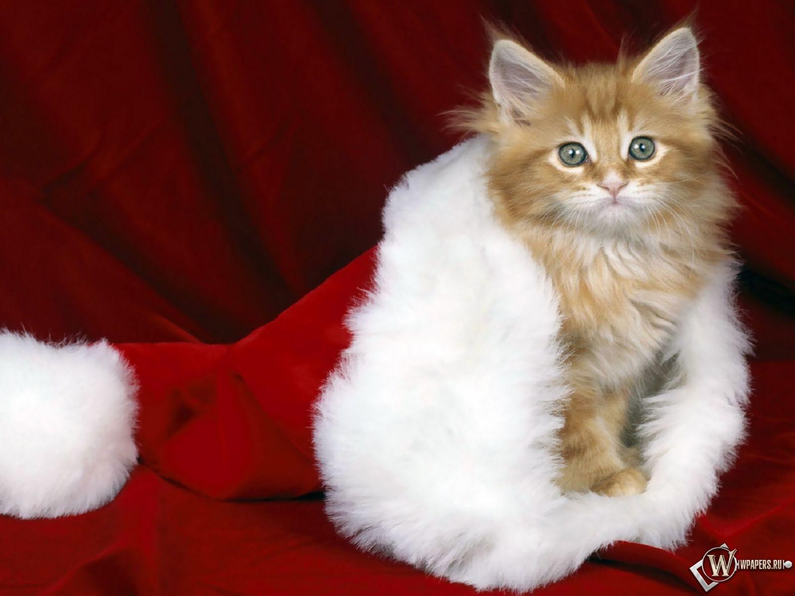 Кошки тоже любят Новый год 1600x1200