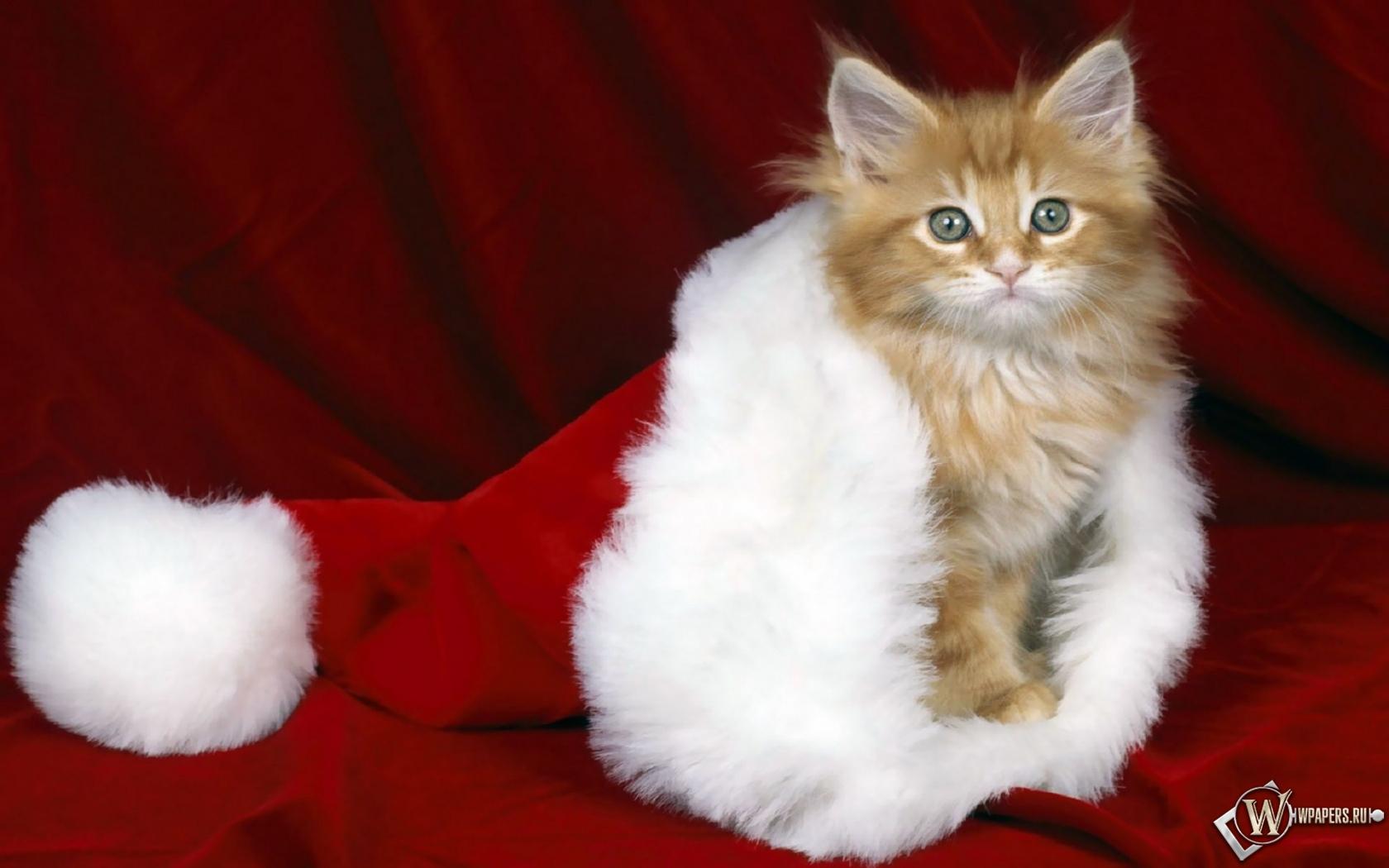 Кошки тоже любят Новый год 1680x1050
