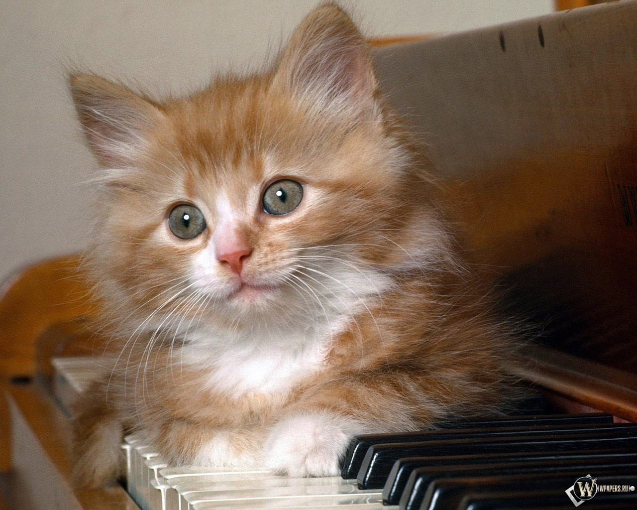 Котёнок на фортепиано 1280x1024
