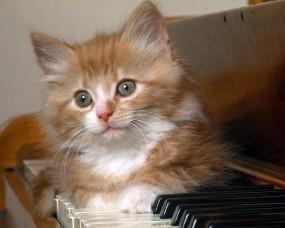 Обои Котёнок на фортепиано: Котёнок, фортепиано, Кошки