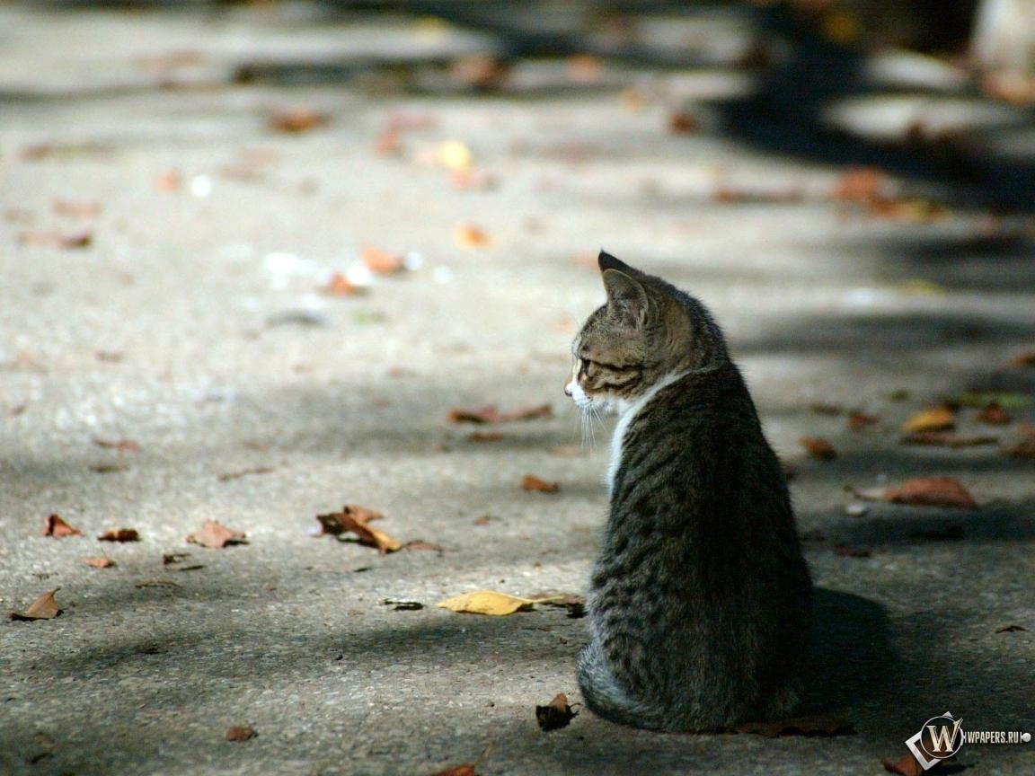 Осенний котёнок 1152x864